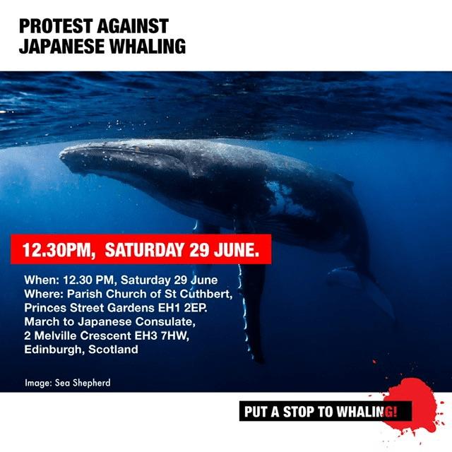 Whale March Edinburgh 29 JUNE 2019