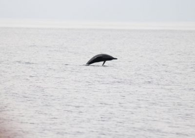 Hebridean Whale Cruises Whale and Dolphin Boat Trip (9)
