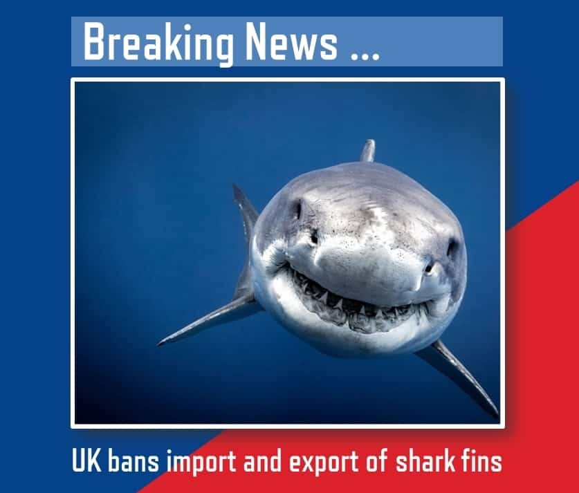 UK Government ban on Shark fin imports and exports